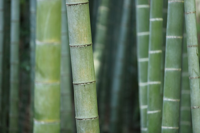 Tips for Growing Bamboo
