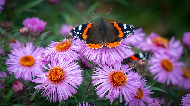 Creating a Wildlife Haven in your garden