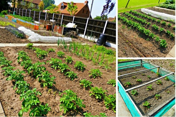 National Allotment Week Competition: The Winner Is...