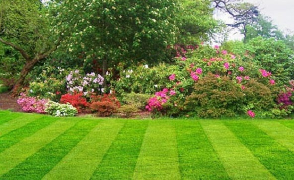 Top Tips for How to Build a New Lawn