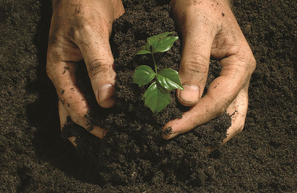 Why Peat Free Compost is the Greener Way Forward