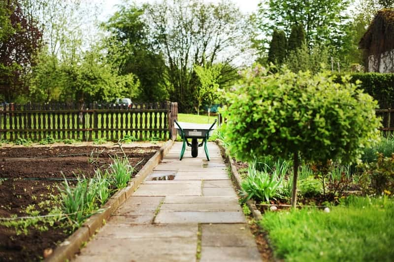 5 Gardening Tips for March