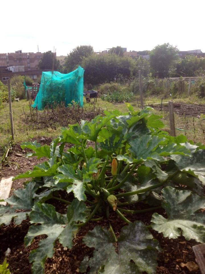 Gill B's Allotment