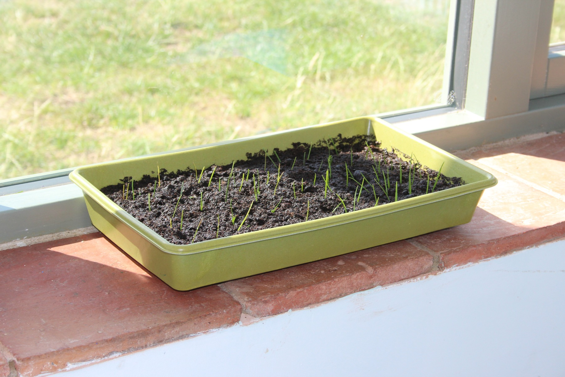 Bamboo Grow Tray Windowsill