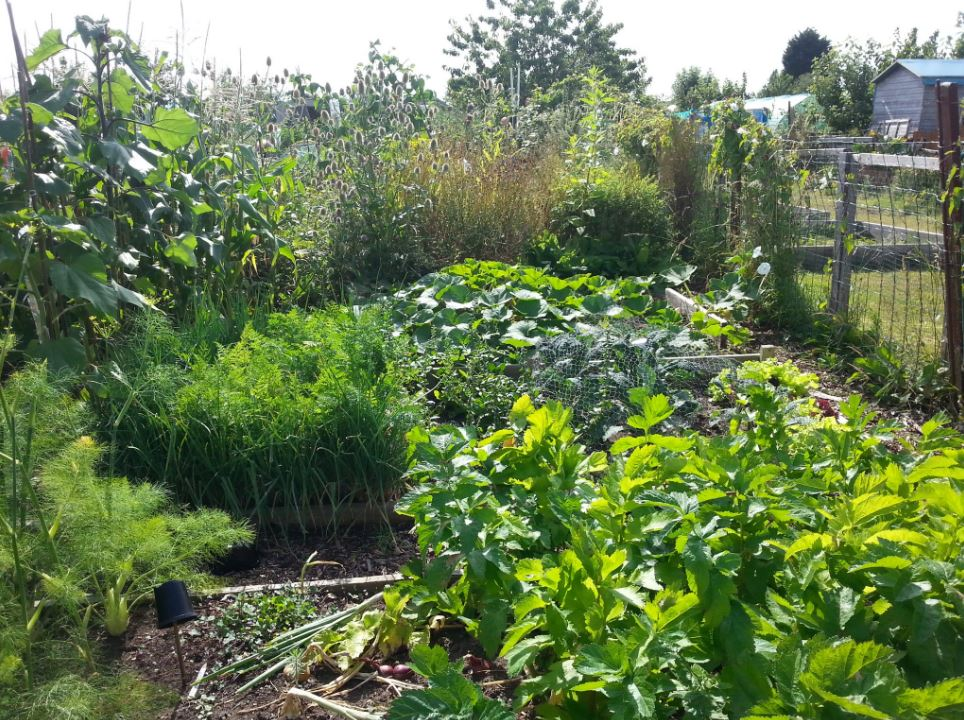 Suzanne's Allotment