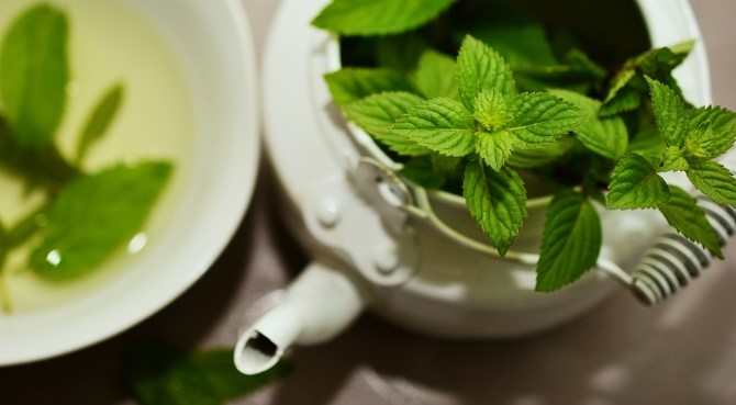 Mint growing tips