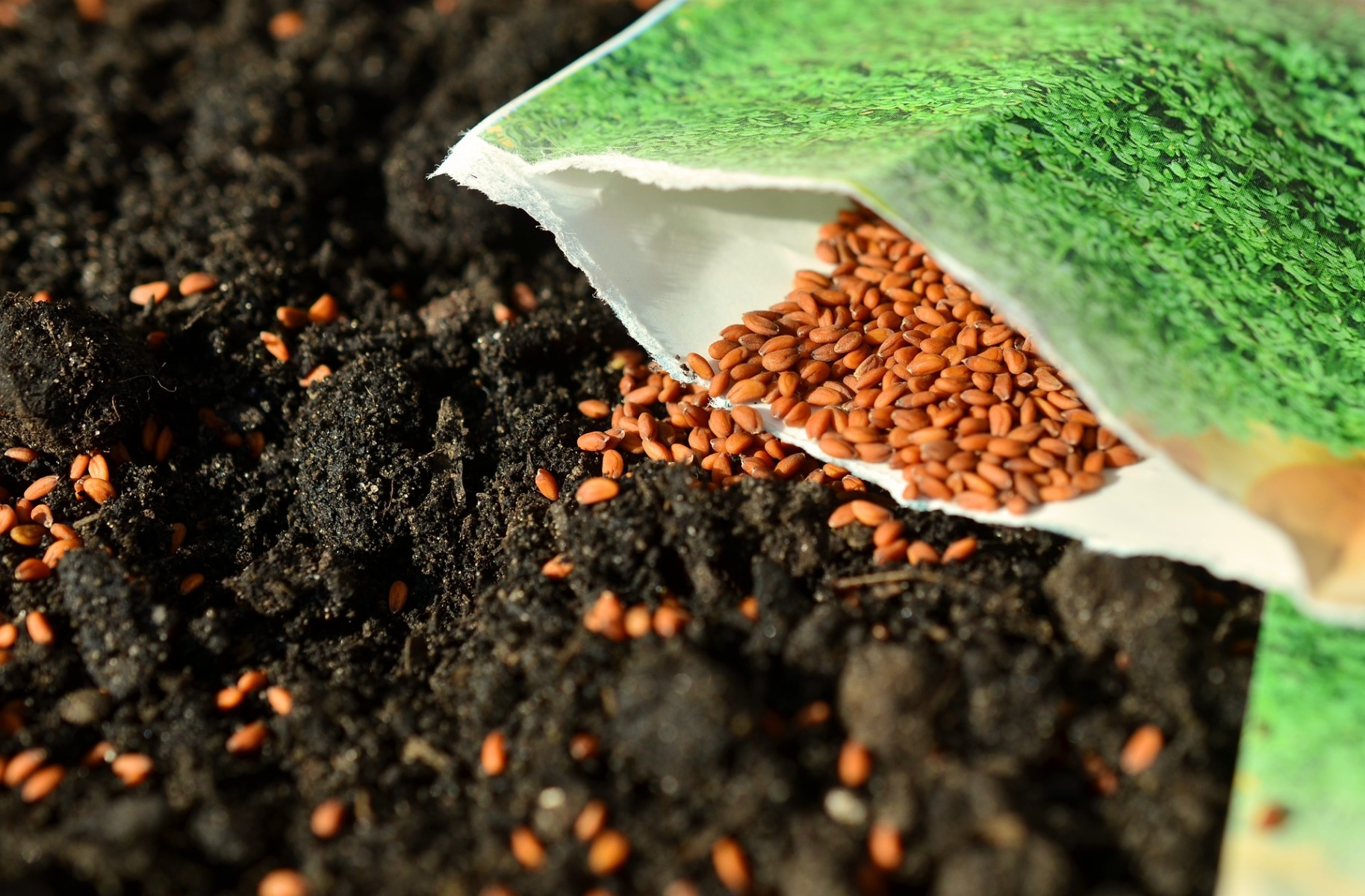 Seeds Potting Compost